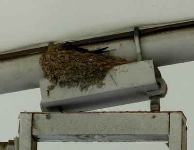 ツバメの巣が