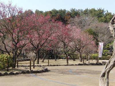 梅の花祭り
