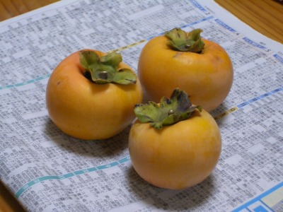 我が家最大の柿