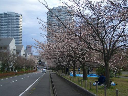 東戸塚の桜