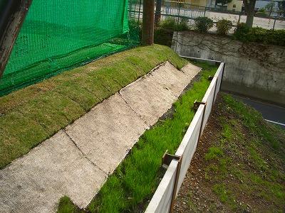 3種類の芝
