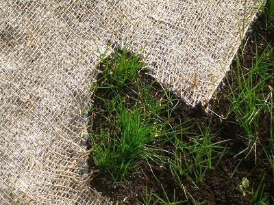 切り貼り芝