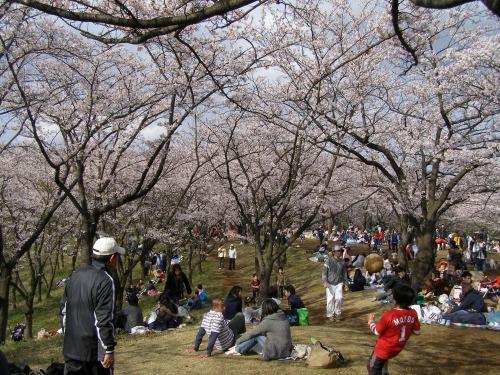桜山は大渋滞